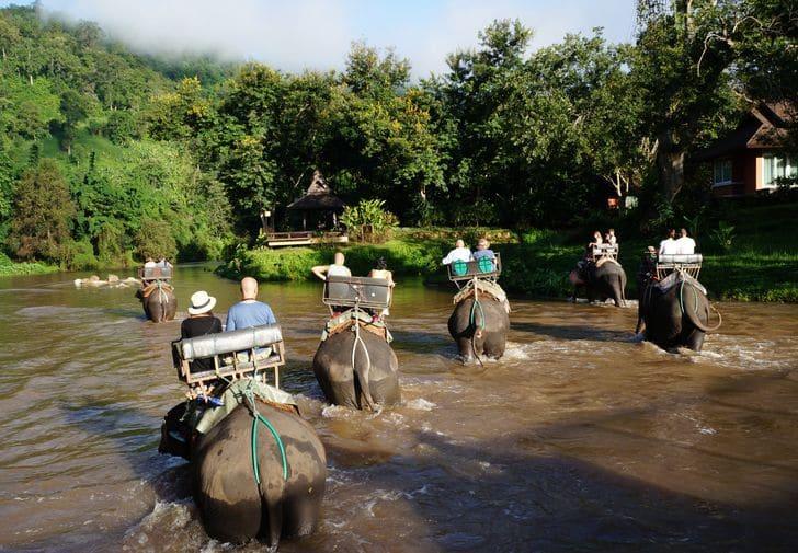 Trekking in elefante in Thailandia: perché non lo rifarei