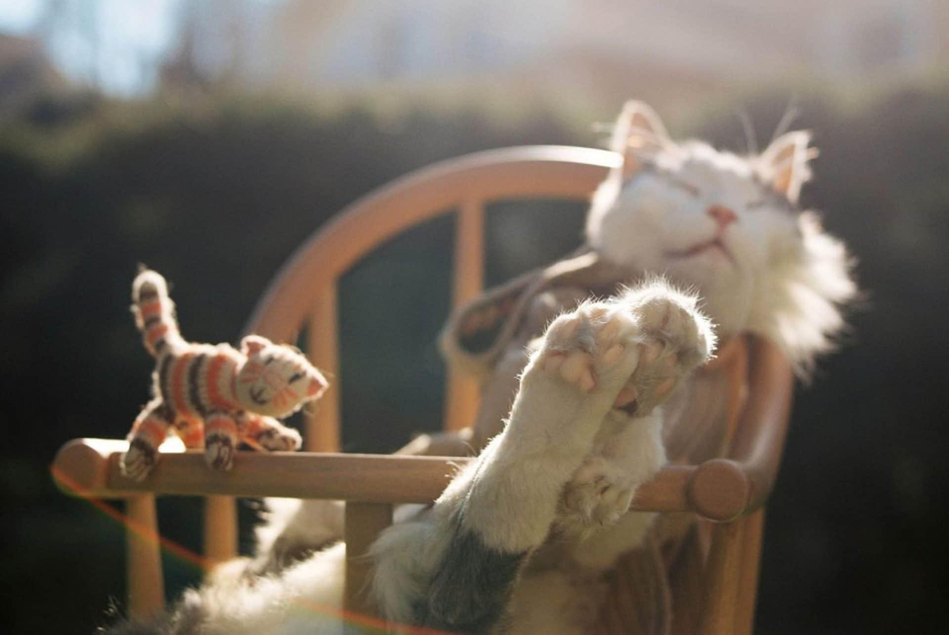 Pastel deaths: la fotografia per elaborare il lutto animale