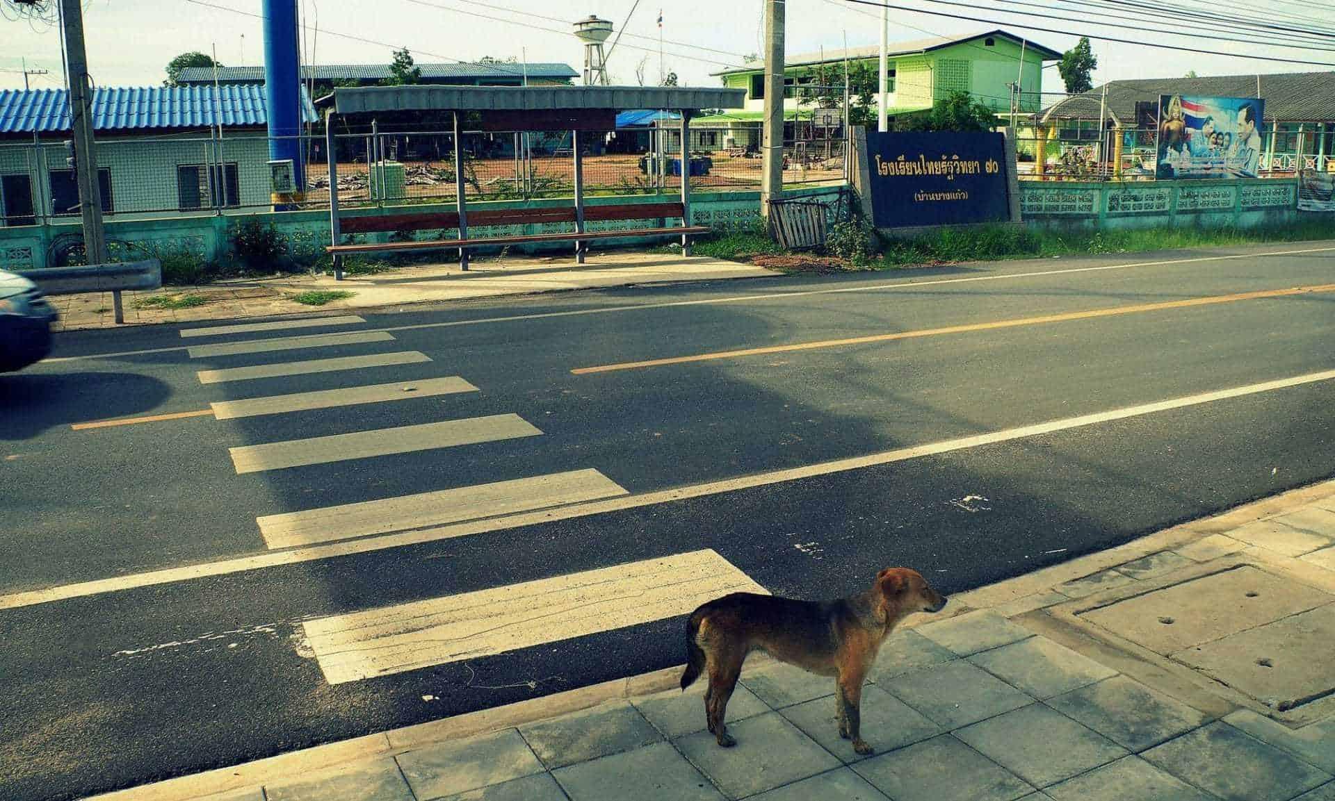 Il randagismo in Thailandia: un problema difficile da risolvere