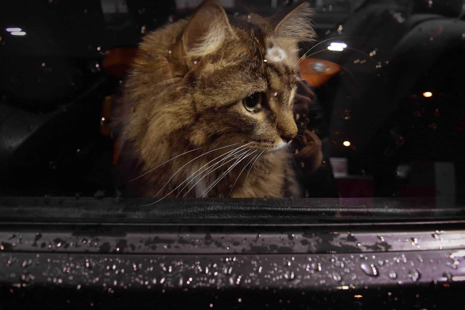 Come trasportare un gatto in auto: 5 consigli utili per affrontare il viaggio