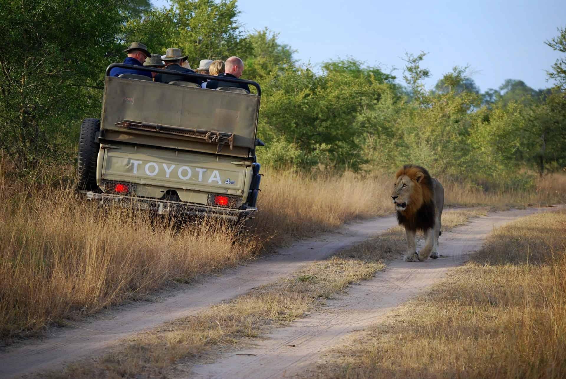 Safari in Namibia: cosa sapere prima di partire