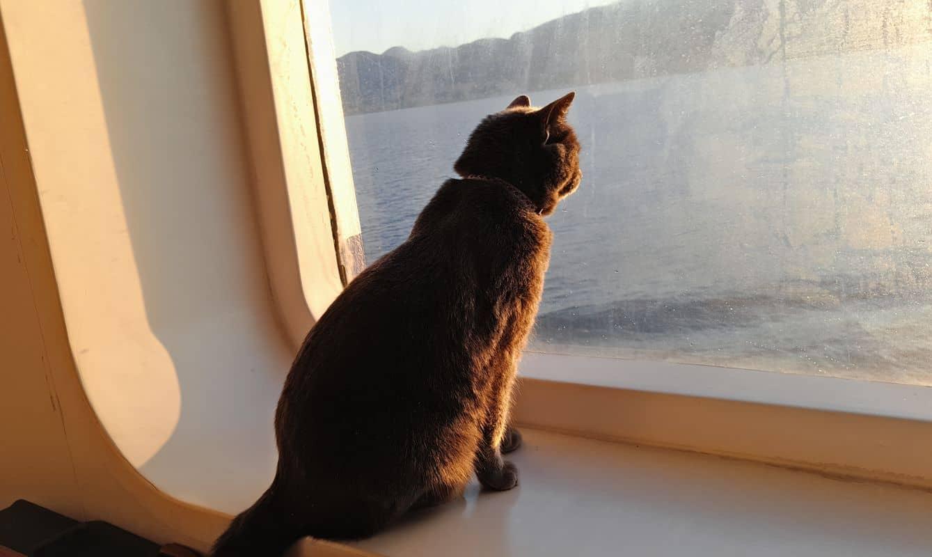 Viaggiare con un gatto: 5 cose da sapere prima di partire