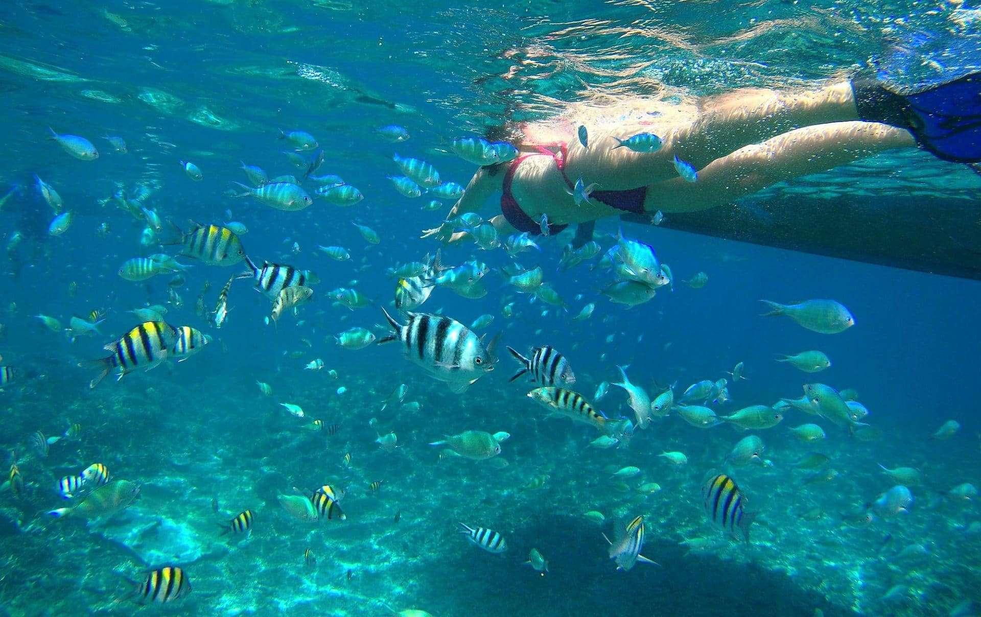 Snorkeling alle isole Gili tra fondali corallini, pesci tropicali e tartarughe marine