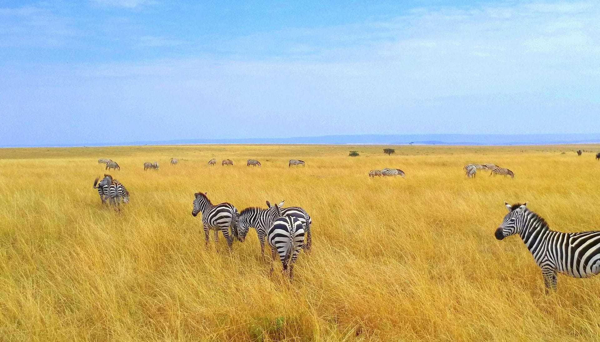 10 cose da sapere sul Kenya prima di partire
