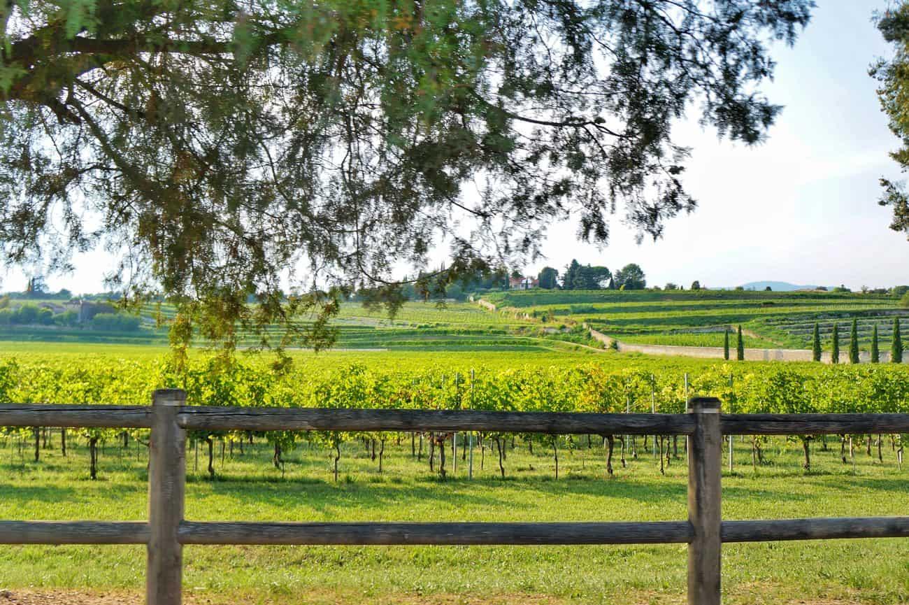 Cosa vedere in Valpolicella in un weekend tra vino, borghi e ville